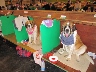 Bib Time! - Huron Tours Crufts Dog Show